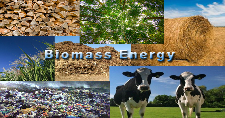Biomass Renewable Energy ~ Is biomass energy really a renewable source