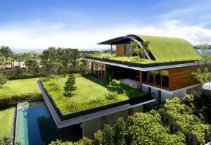 (sourced from National Geographic) From city to home, the green roof design is beneficial.