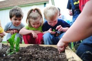 Sustainable Childrens Garden